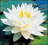 fengshui3-usa-flores-y-plantas-naturales